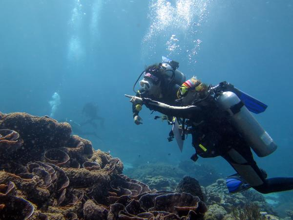 East Timor tour and marine conservation