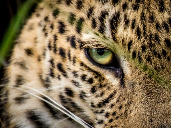Wildlife photography and volunteering in South Africa