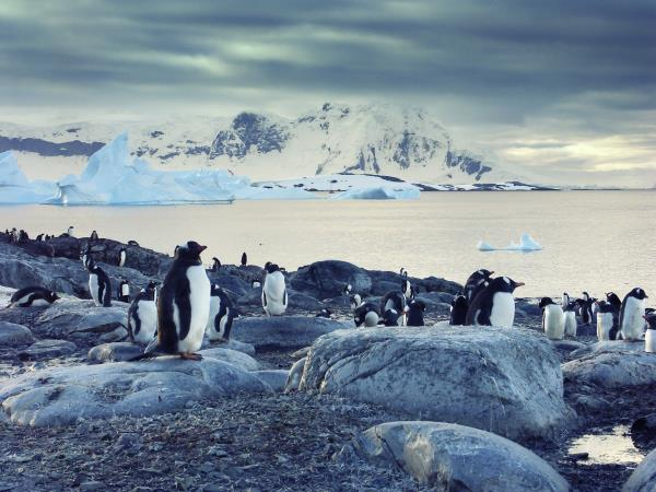 Antarctic 8 day tour