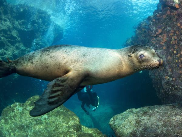 Galapagos wildlife holiday
