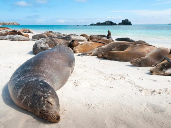 Galapagos wildlife cruise