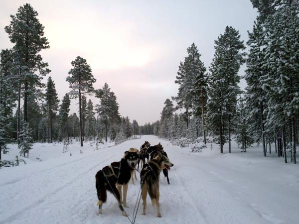 Christmas or New Year 2019 in Lapland