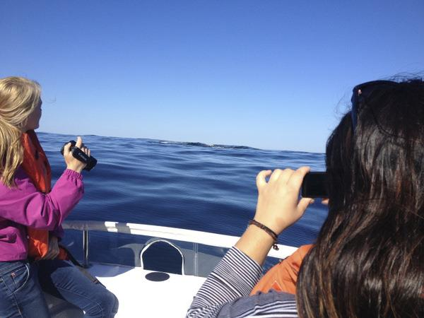 Whale and Dolphin monitoring in South Africa