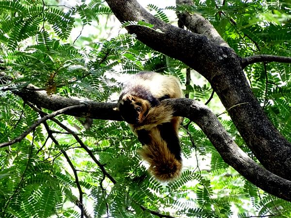 Western Ghats wildlife tour in India