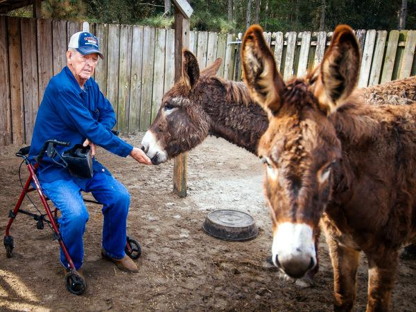 Volunteer with horses in Florida, USA