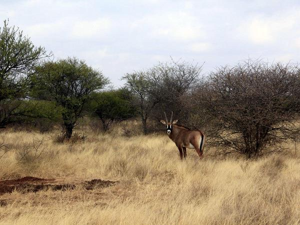Game capture and relocation in South Africa