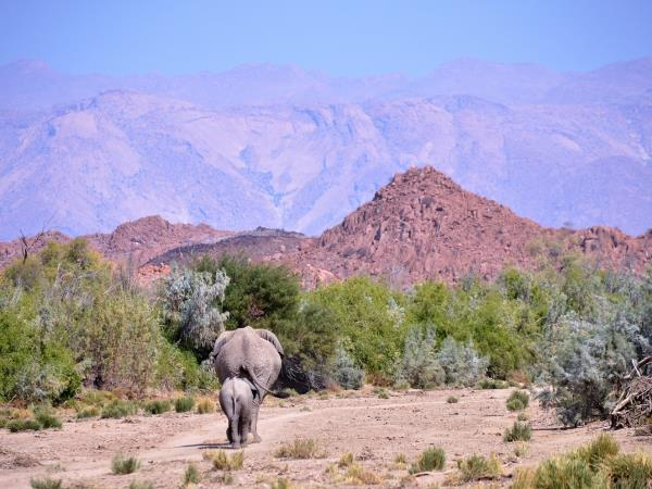 Elephant conservation holiday for families, Namibia