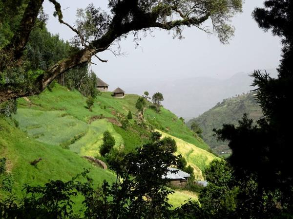 Ethiopia trekking in Wof Washa forest