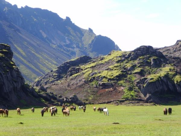 Horse riding holiday in Iceland, 5 days