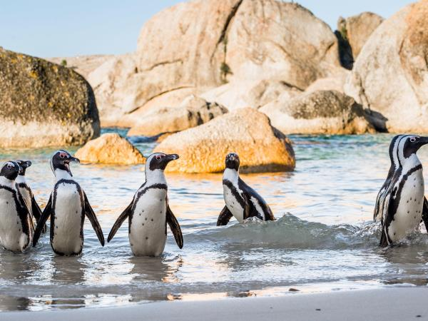 South Africa family holiday, Cape Town and safari