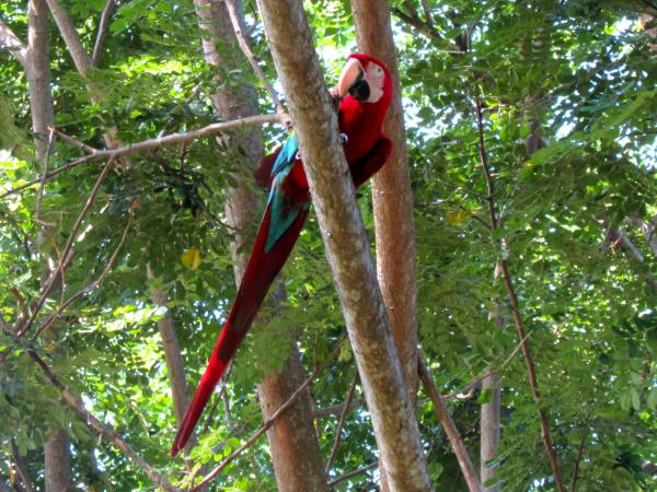 Borneo birdwatching tour
