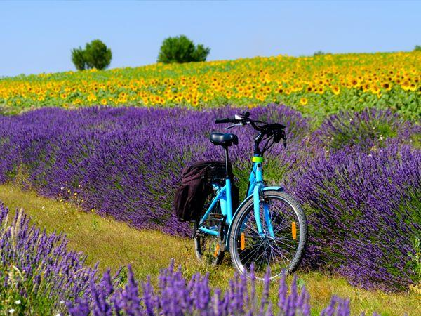Provence cycling tours, tailor made