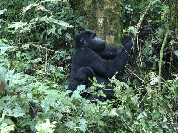 Tailor made Uganda holiday, culture and wildlife
