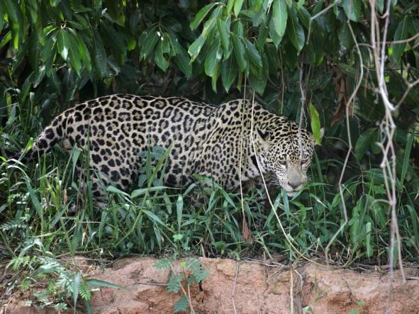 Brazil small group holiday, Pantanal explorer