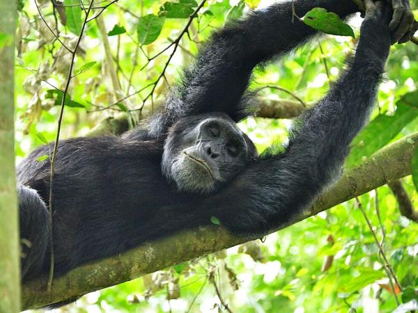 Uganda family holiday, wildlife and culture