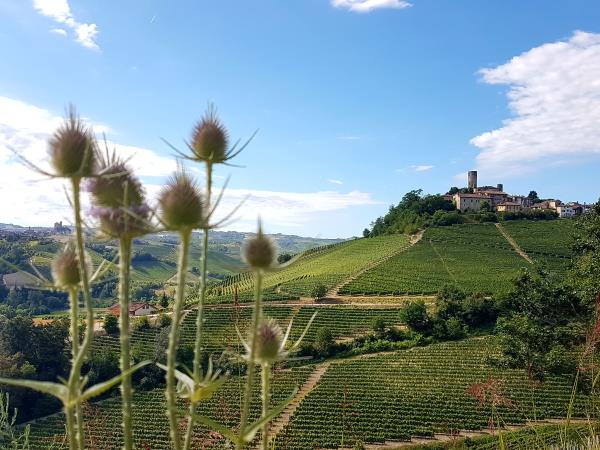 Piedmont self guided walking holiday in Italy