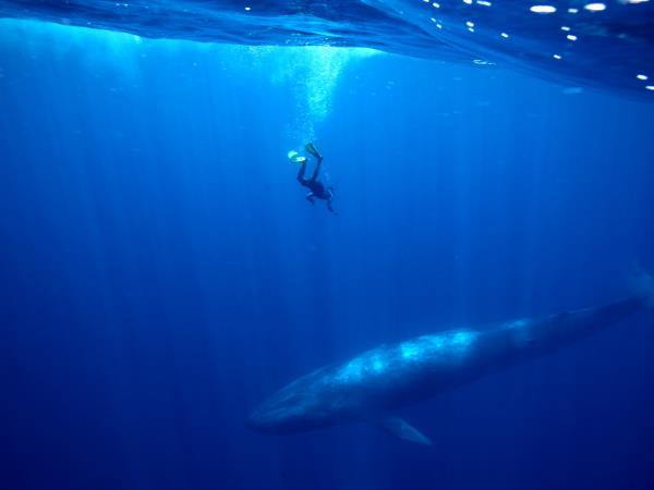 Swim with Blue Whale and safari in Sri Lanka