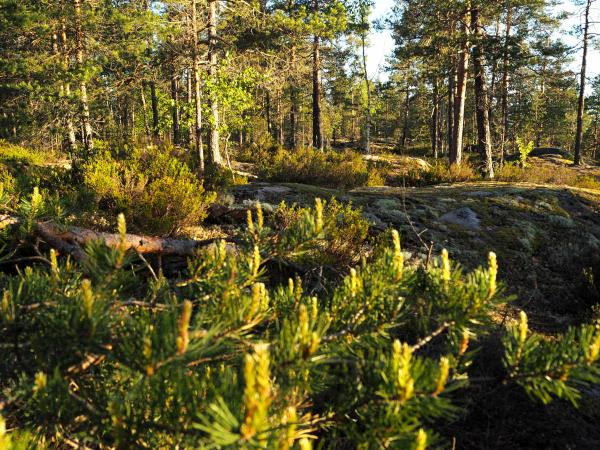 Finland activity holiday in Nuuksio National Park