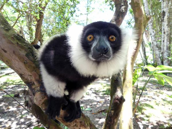 Madagascar wildlife holiday with zoologist guide