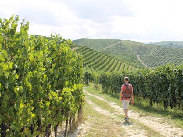 Piedmont walking holiday, self guided