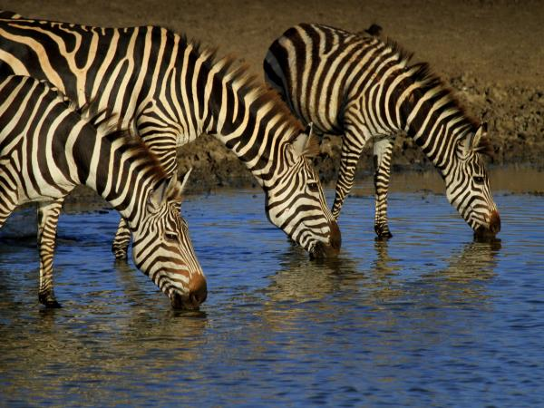 Tanzania 6 day safari tour