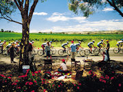 Riding in the vineyards, South Australia. Photo by South Australia Tourist Board