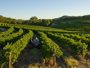 Vineyards at Clare Valley, South Australia. Photo by South Australia Tourist Board