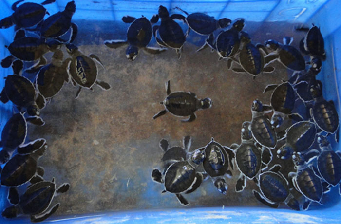 Turtle hatcheries