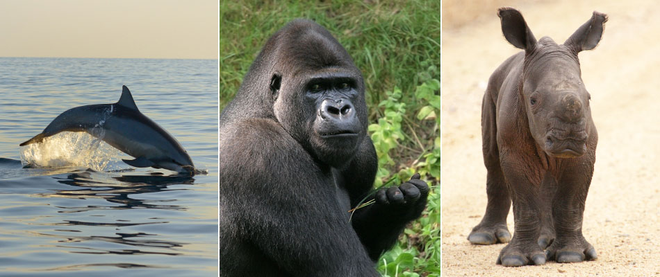 Dolphin, gorilla and rhino