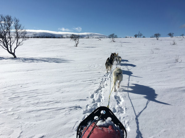 Dog sledding with Iditarod Racers