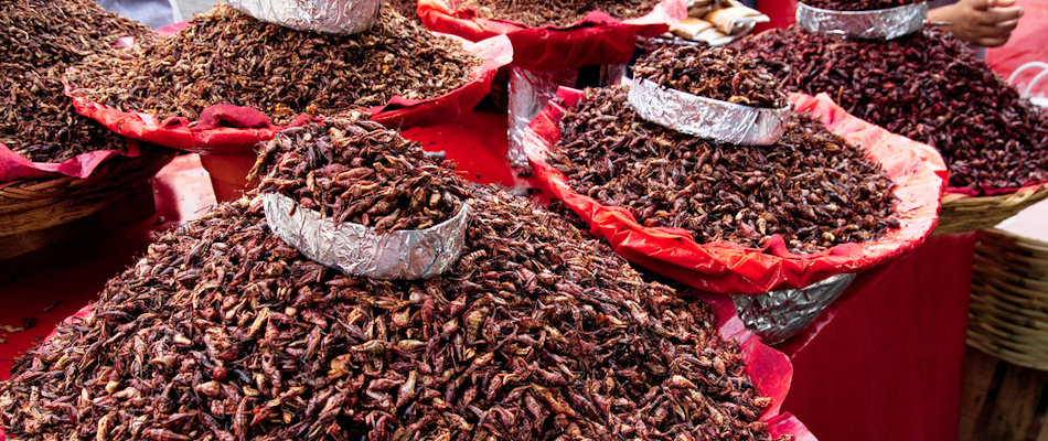 Chapulines (Photo by William Neuheisel)