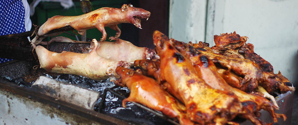 Roasted guinea pig (Photo by Nestor Lacle)