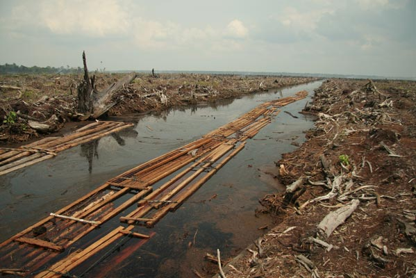 Deforestation image by Wakx