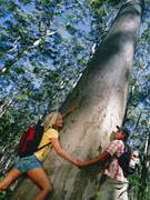 Couple at base of Karri Tree, Western Australia. Photo by Tourism Western Australia