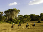 Horses galloping in Menorca. Photo by Menorca Tourist Board