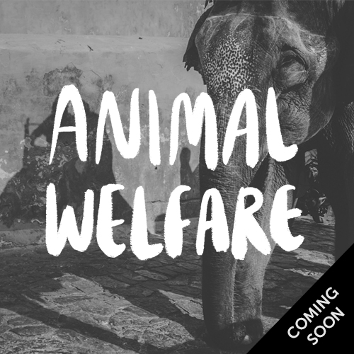 Animal welfare, coming soon
