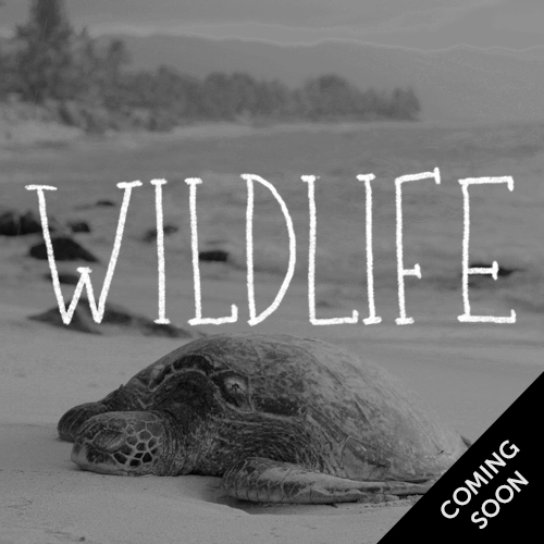 Wildlife, coming soon