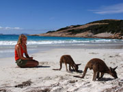 Kangaroos at Lucky Bay in Western Australia. Photo by Tourism Western Australia