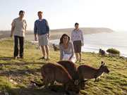 Kangaroos on clifftop, South Australia. Photo by South Australia Tourist Board
