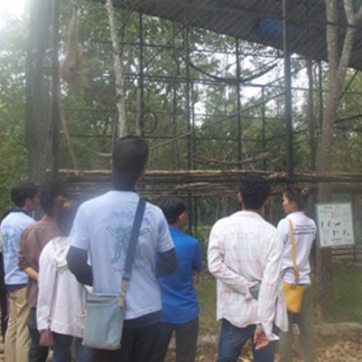Youths looking into enclosure
