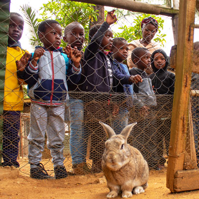 Children looking at rabbit