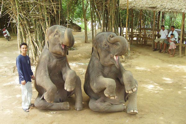 Responsible tourism in thailand what you can do inform yourself of the issues first by reading out comprehensive guide to elephant trekking some animal rights organisations urge a solutioingenieria Image collections