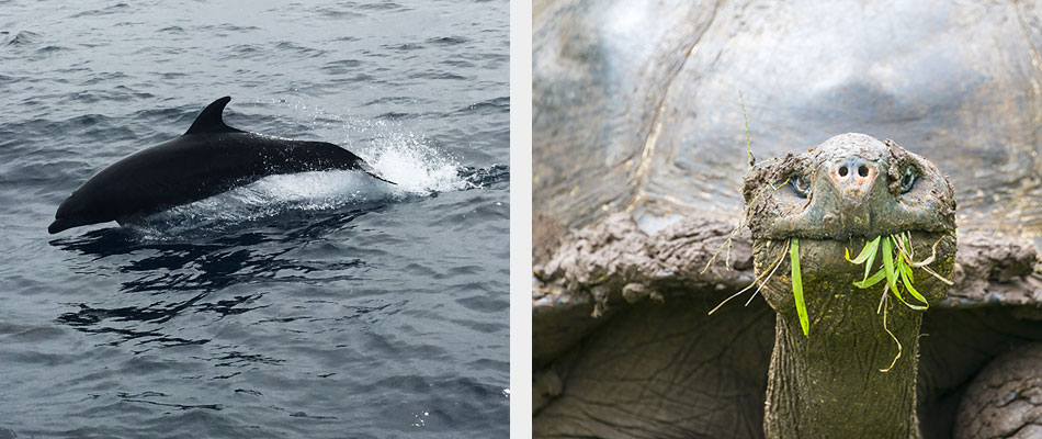 Dolphin and Giant tortoise