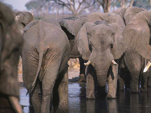 Zimbabwe holiday, walking and wildlife