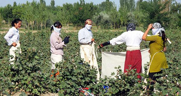 Cotton Picking Field Trip Responsible Tourism In Uzbekistan Helping