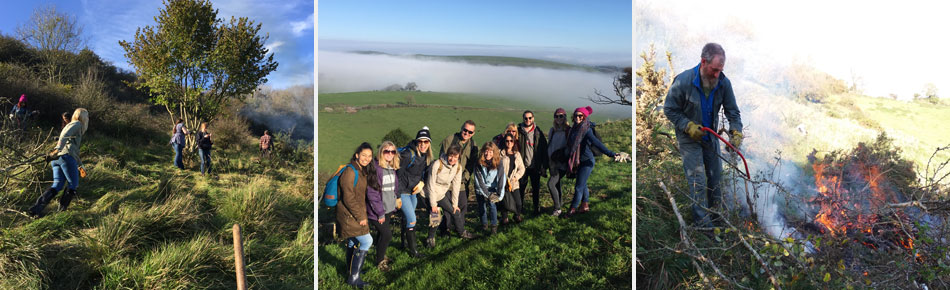 South Downs office volunteer day