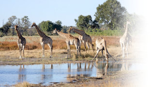 Wildlife holidays in Botswana