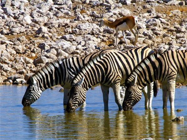 Namibia and Botswana safari