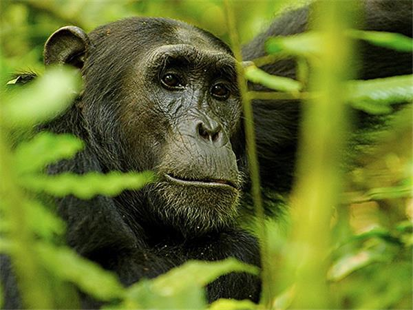 Uganda gorillas and wildlife holiday