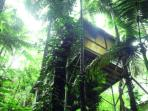 Daintree luxury accommodation, Queensland, Australia